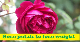 How to Use Rose Petal to Lose Weight